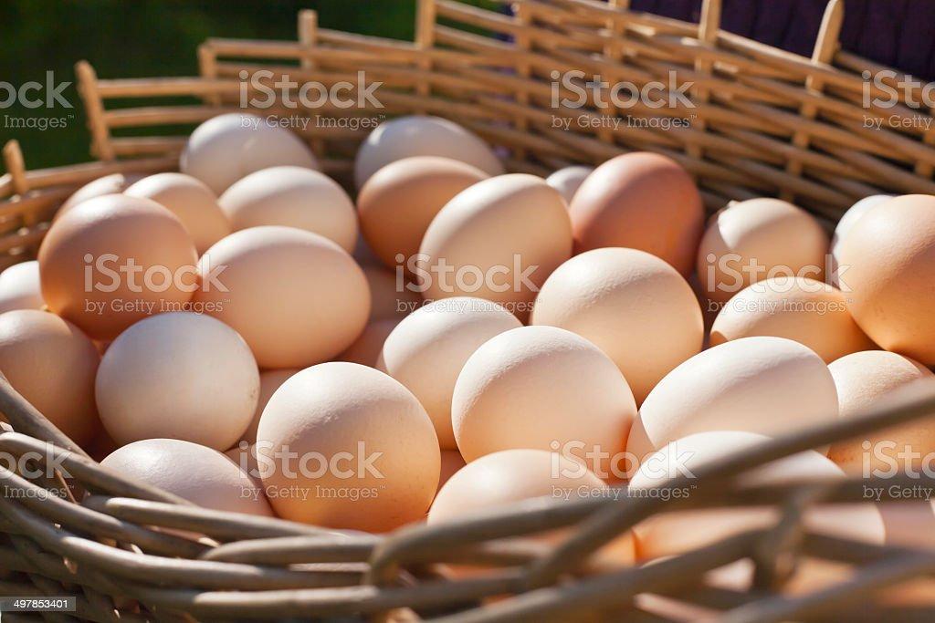 Farm Fresh Eggs Stock Photo - Download Image Now - iStock