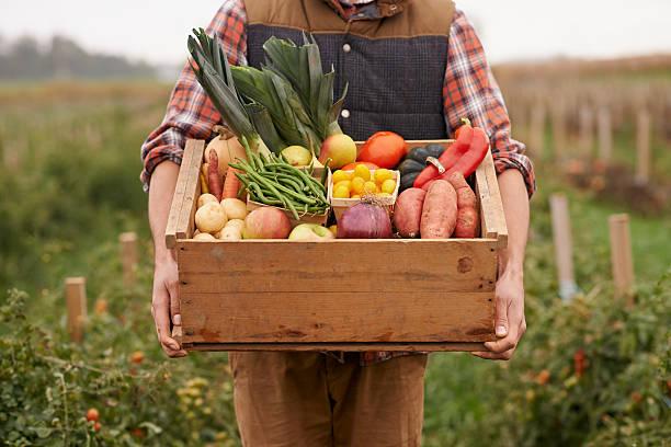 farm fresh veggies! - 田舎のライフスタイル ストックフォトと画像