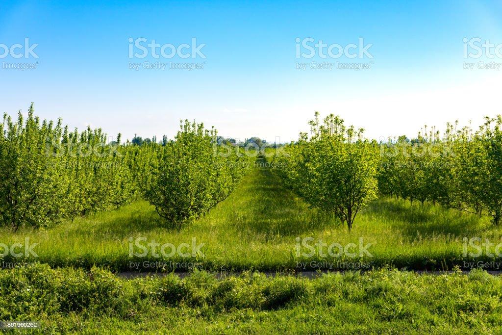 Farm gardens stock photo