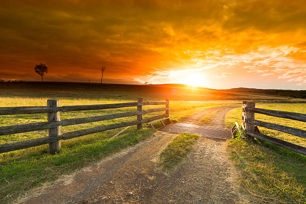 Farm Gate Gravel path onto rural property under golden sunset.  ranch stock pictures, royalty-free photos & images