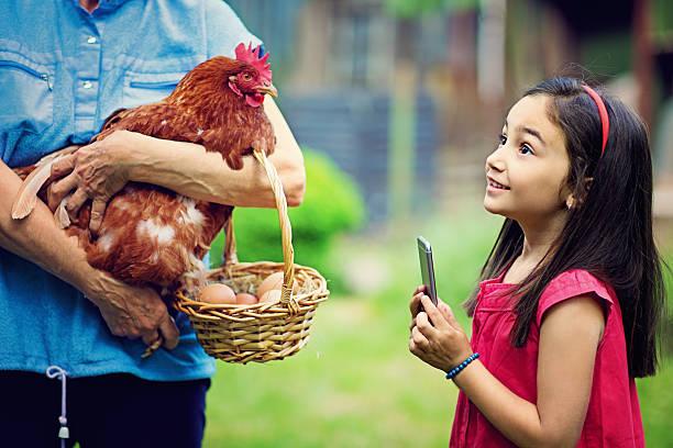 farm mädchen - lustiges huhn bilder stock-fotos und bilder