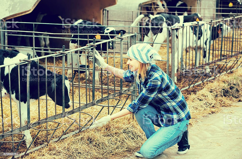Farm girl with calves in cowhouse stock photo