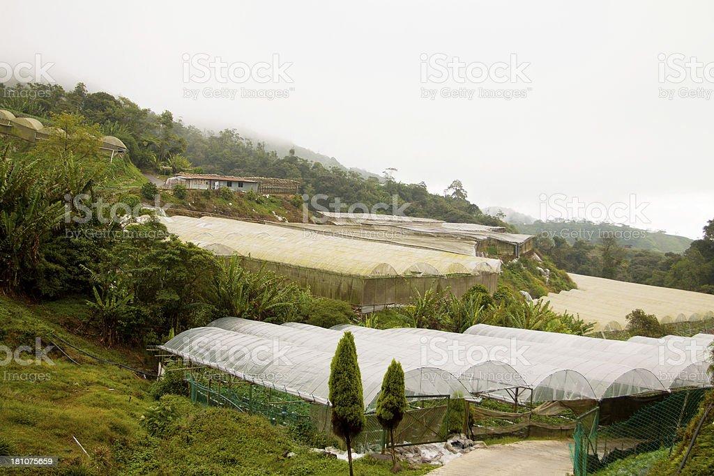 Farm greenhouses royalty-free stock photo