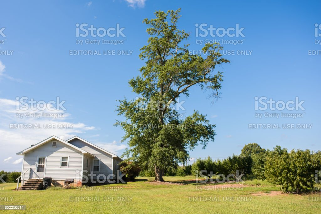 Farm house in upstate South Carolina Chesnee, South Carolina, September 10, 2017: Typical farm house design in rural Chesnee, S.C., on a large plot of land with a giant oak tree growing beside. Peach tree field beside it. Agricultural Field Stock Photo