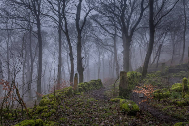 Farm house ruines in Brinscall Woods. stock photo