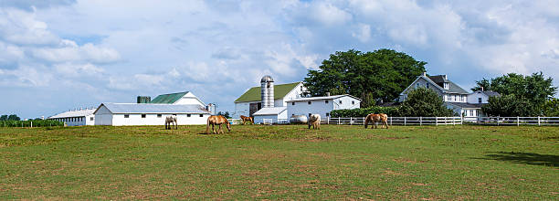 farm house field et silo - Photo