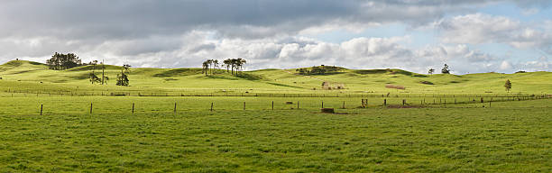 Farm in New Zealand stock photo