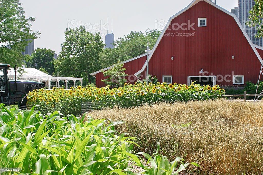 Farm in the city royalty-free stock photo