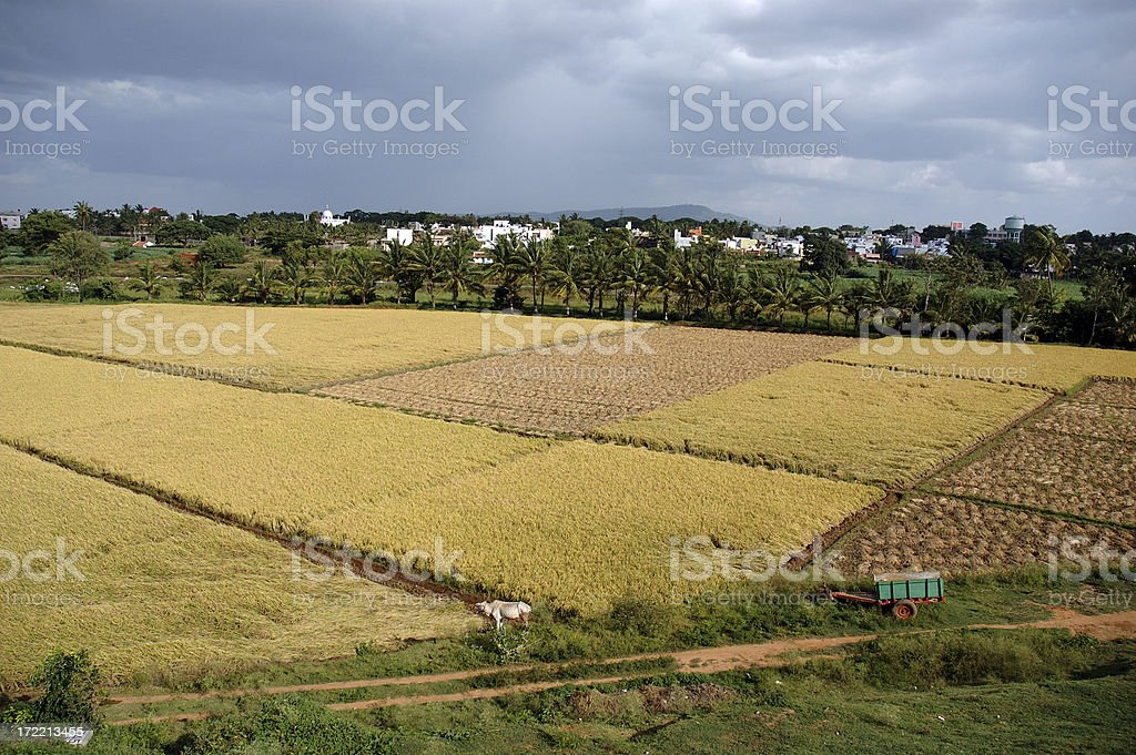 Farm : India Farmland in Mysore royalty-free stock photo