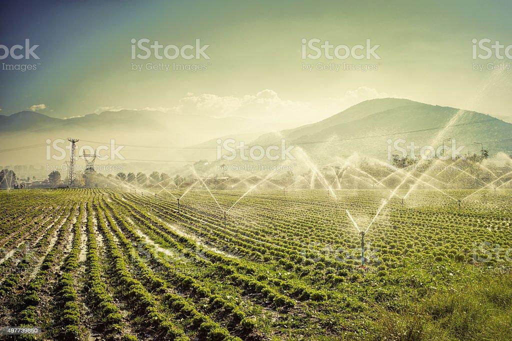 farm irrigation stock photo