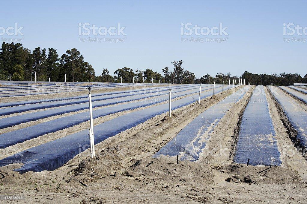 farm irrigation preparations royalty-free stock photo