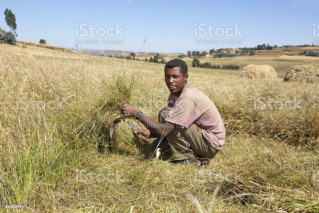 Farm labourer cuts grass in the field to make hay royalty-free stock photo