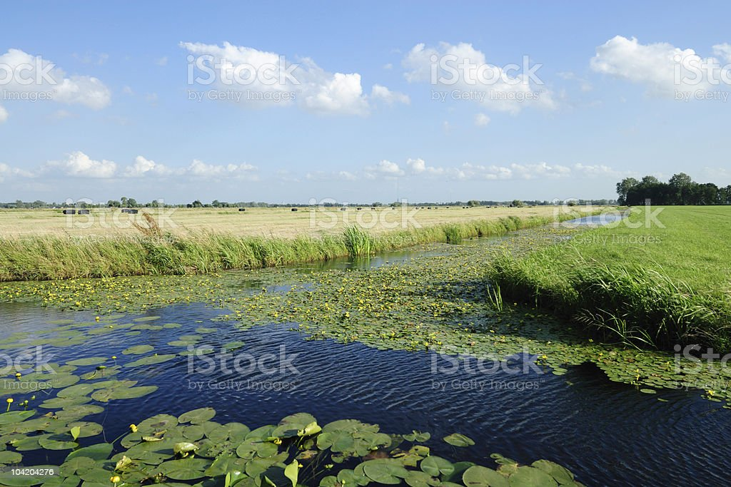 Farm landscape in the Netherlands with ditch during summer royalty-free stock photo