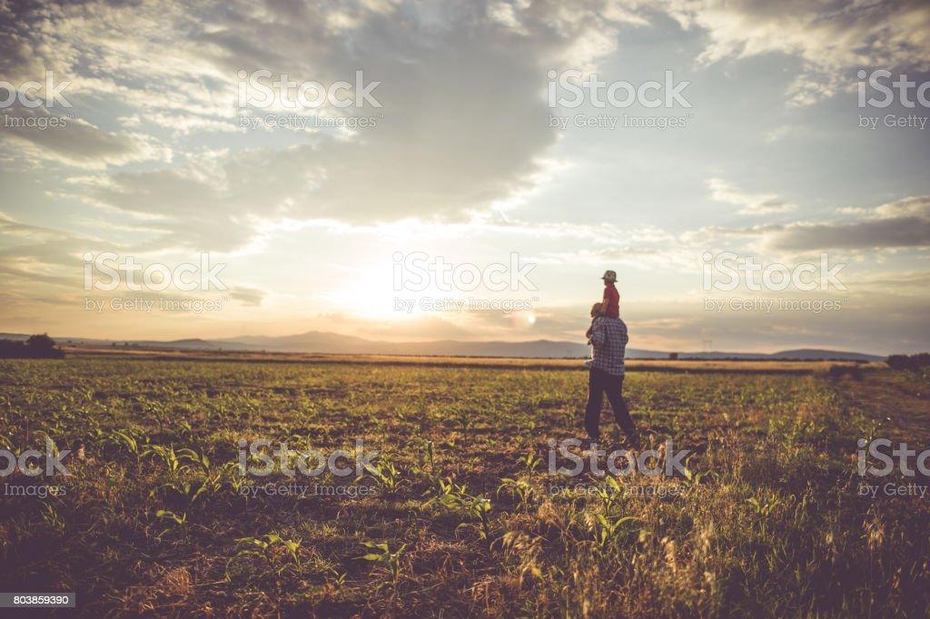 Farm paisaje - foto de stock