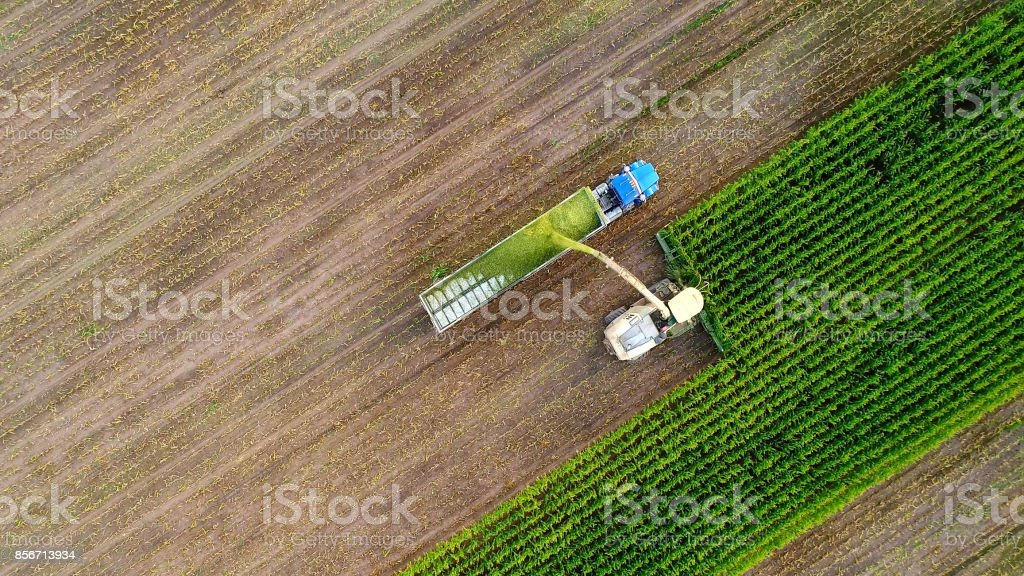 Farm machine and semi truck harvesting corn in Autumn stock photo