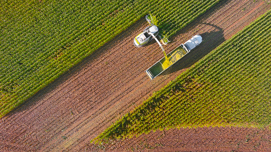 Farm machines, combine and semi-truck harvesting corn, entire plant is used, aerial view.
