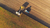 Farm machines harvesting corn in the evening, casting long shadows. Aerial view.