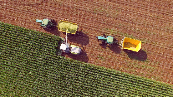 Farm Machines Harvesting Corn For Feed Or Ethanol Stock Photo - Download Image Now