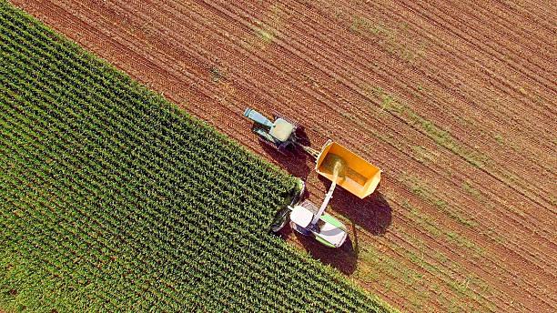 maszyny rolnicze zbierające kukurydzę na paszę lub etanol - zbierać plony zdjęcia i obrazy z banku zdjęć