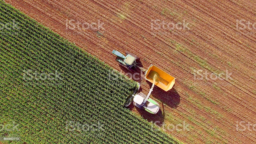 Farm machines harvesting corn for feed or ethanol - foto de stock