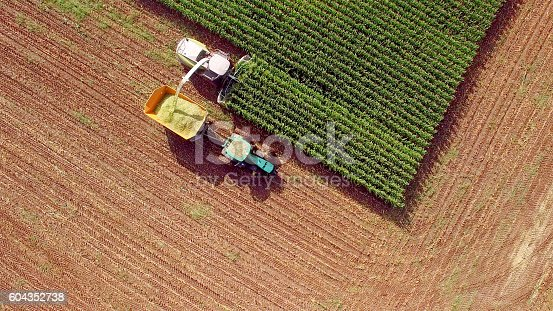 istock Farm machines harvesting corn for feed or ethanol 604352738