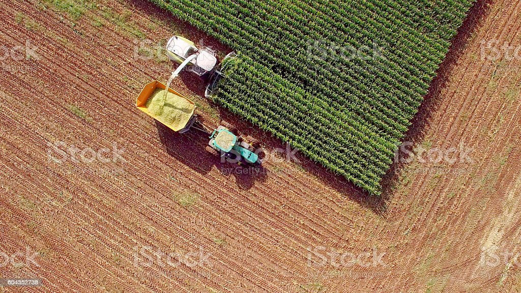 Farm machines harvesting corn for feed or ethanol stock photo