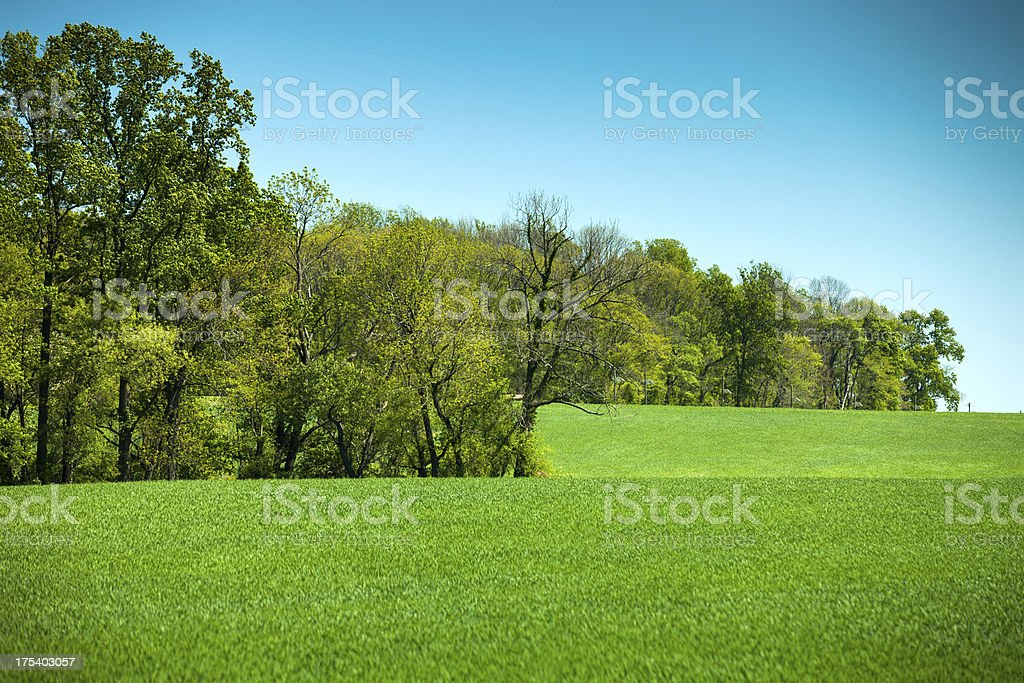 Farm Meadow and Tree Line In Spring stock photo