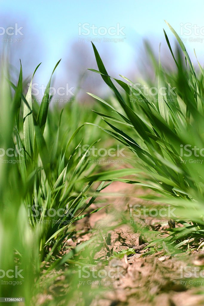 Farm - New Crops (April) royalty-free stock photo