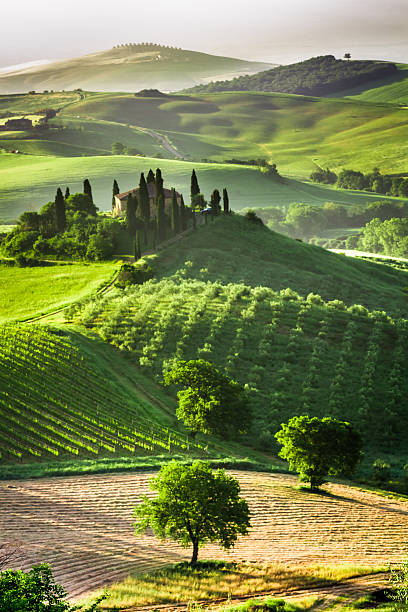 Farm of olive groves and vineyards Farm of olive groves and vineyards. pienza stock pictures, royalty-free photos & images
