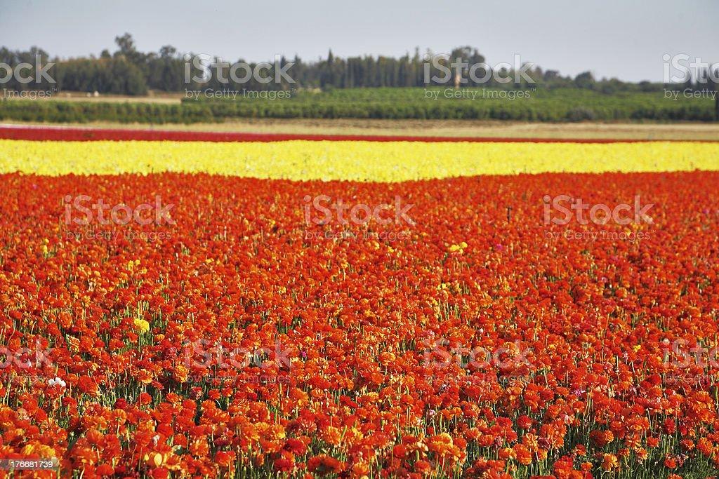 Farm on Israel royalty-free stock photo