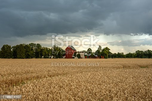Eskilstuna, Sweden, 02-08-2019. Farm with red buildings at the end of a large yellow field of wheat. Gray overcast sky with some rain coming down in the distance