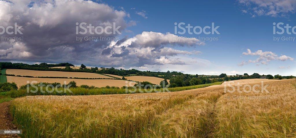 Farm panorama, wheat fields under a cloudy sky stock photo