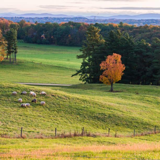 farm pastures in Vermont stock photo