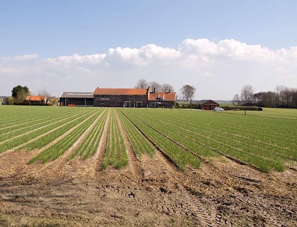 farm stock photo