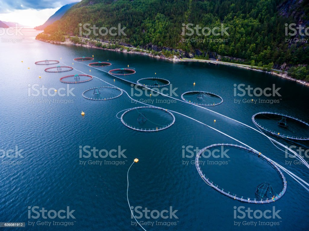 Farm salmon fishing stock photo