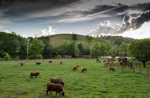 Farm Scene stock photo