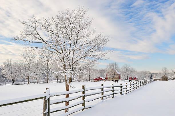 Farm Scenics in Winter