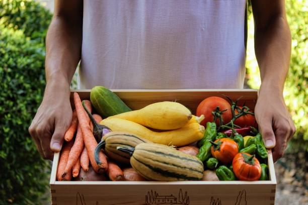 Farm Share Delivery Young man at the door delivering Farm Share box full of fresh vegetables community garden stock pictures, royalty-free photos & images