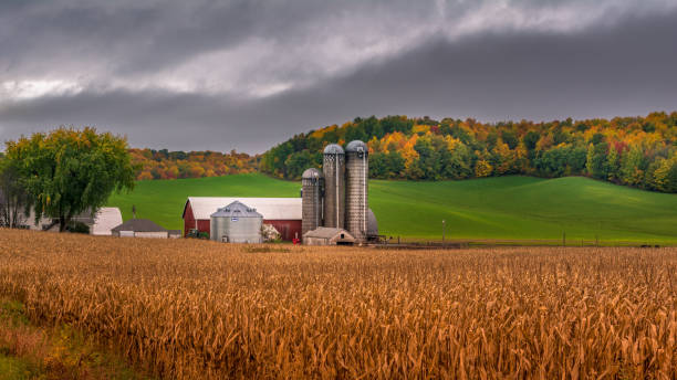 farm silo during fall with background colors farm silo during fall with background colors dane county stock pictures, royalty-free photos & images