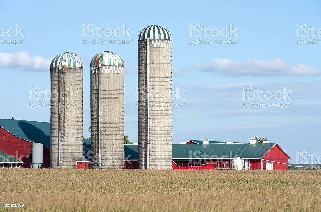Farm Silo's stock photo