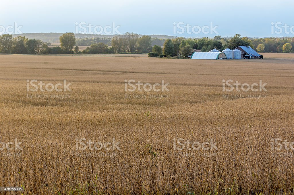 Farm Surrounded By Fields Of Grain stock photo