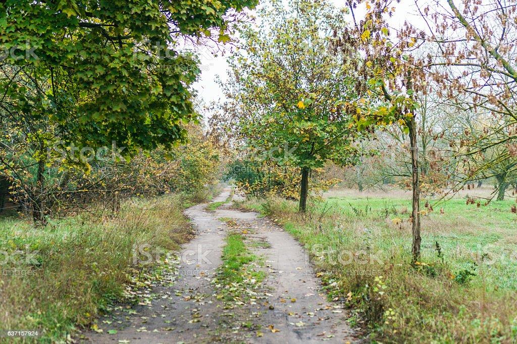Farm track leading through an autumn landscape stock photo
