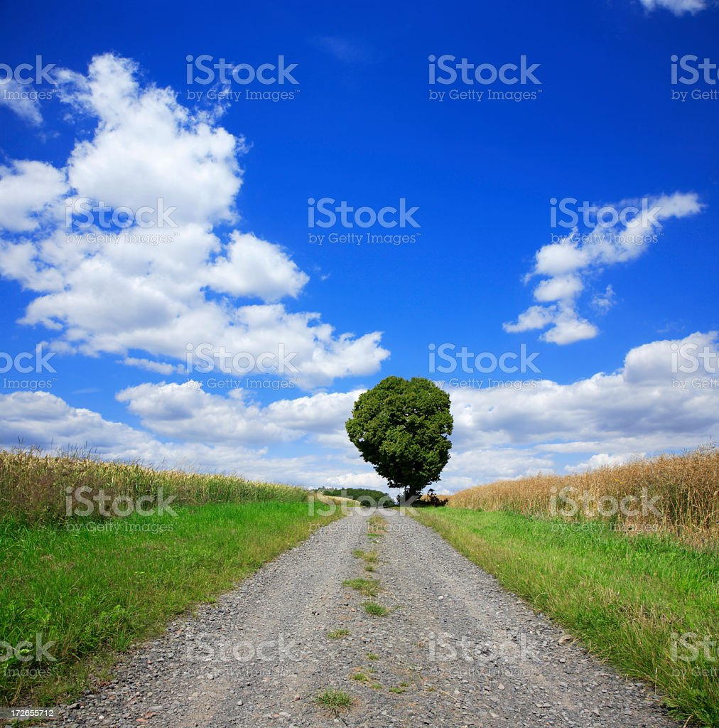 Farm Track royalty-free stock photo