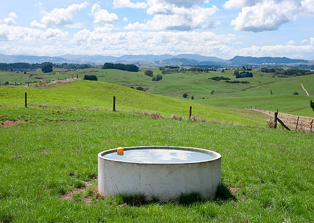 Farm Water Trough Fresh water for cows at a dairy farm on New Zealand's North Island. trough stock pictures, royalty-free photos & images