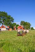 Falköping, Sweden - August 10, 2017: Farm with a farmer that drive draft horses in a field