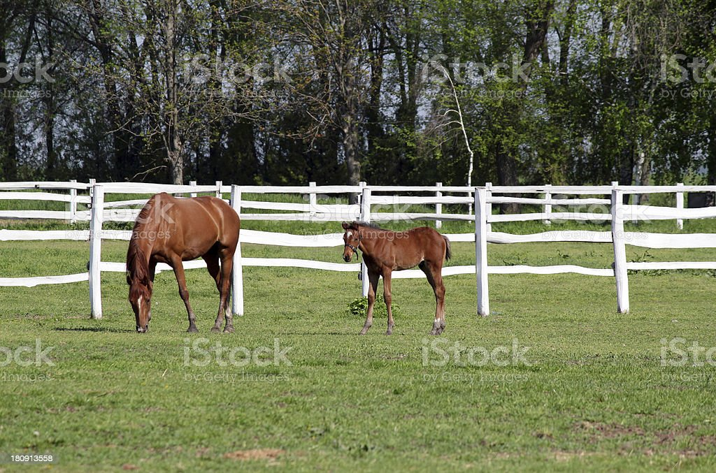 farm with brown horse and foal royalty-free stock photo