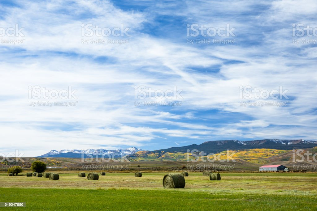 Farm with hay bales in green field after harvest stock photo