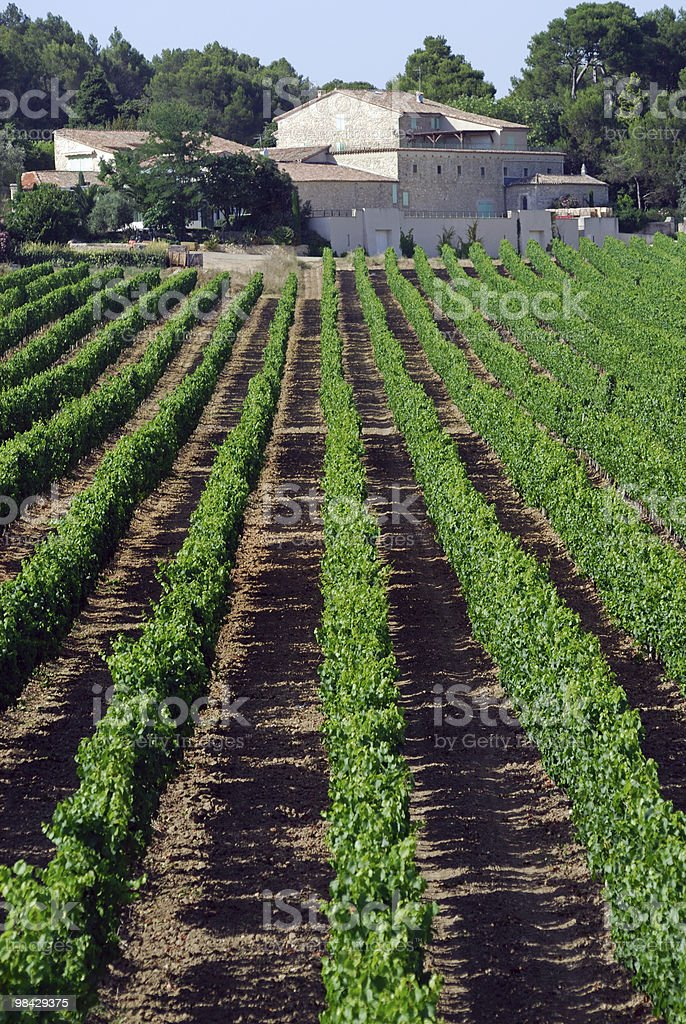 Farm with vineyards near Montpellier (Languedoc-Roussillon, France) at summer royalty-free stock photo