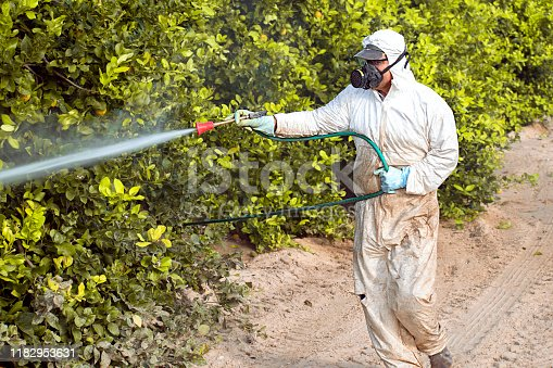 Weed insecticide fumigation. Industrial chemical agriculture. Toxic pesticides, pesticide on fruit lemon in growing agricultural plantation, spain. Man spraying or fumigating pesti, pest control, 2019
