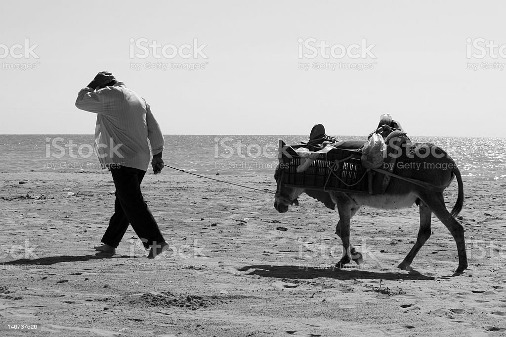 Farm worker in Durres, Albania royalty-free stock photo